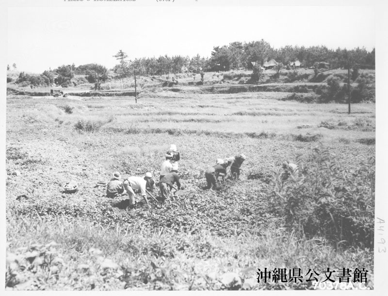 http://www.archives.pref.okinawa.jp/USA/14-34-3.jpg